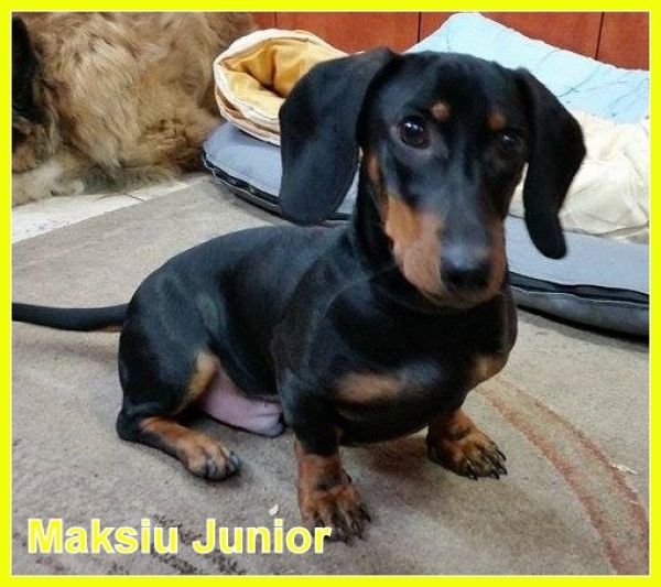 Maksiu Junior